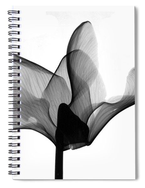 Cyclamen Flower X-ray Spiral Notebook