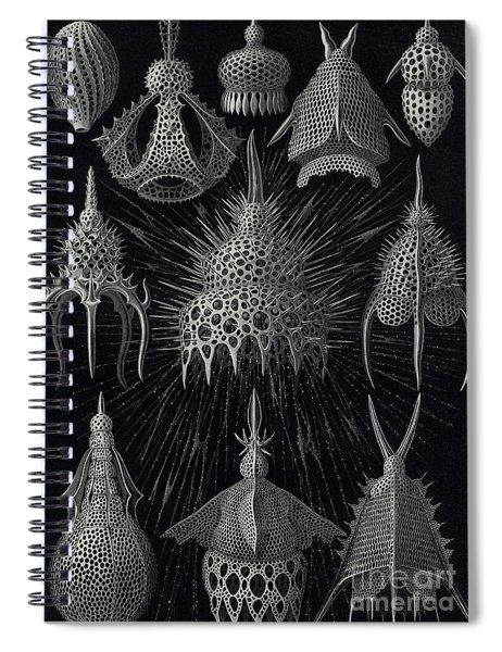 Cyrtoidea Spiral Notebook