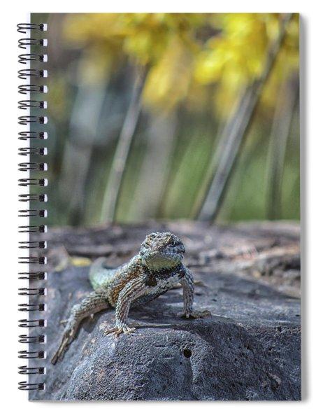 Desert Spiny Lizard 5796-041018-1cr Spiral Notebook