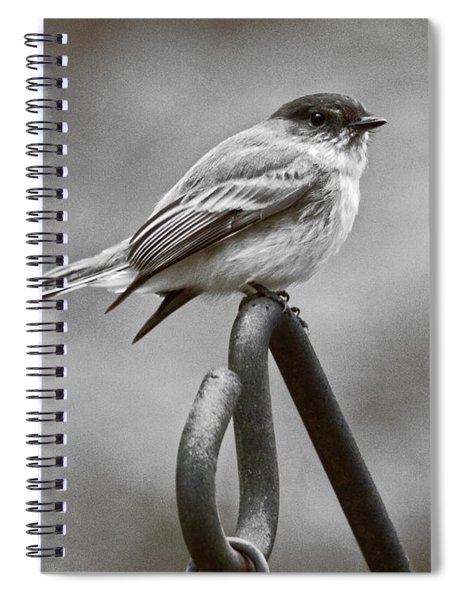 Spiral Notebook featuring the photograph Eastern Phoebe by Robert L Jackson