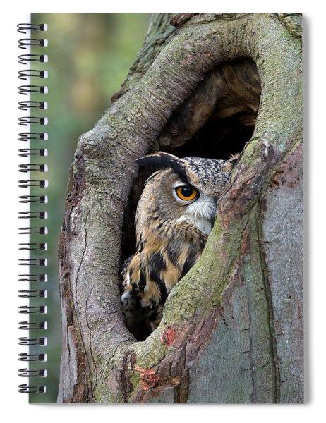 Eurasian Eagle-owl Bubo Bubo Looking Spiral Notebook