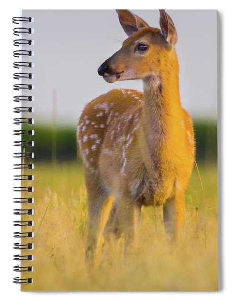 Fawn In Sunlight Spiral Notebook