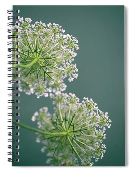 Fragile Dill Umbels On Summer Meadow Spiral Notebook