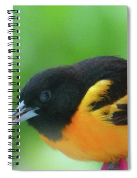 Good Morning Mr. Oriole Spiral Notebook