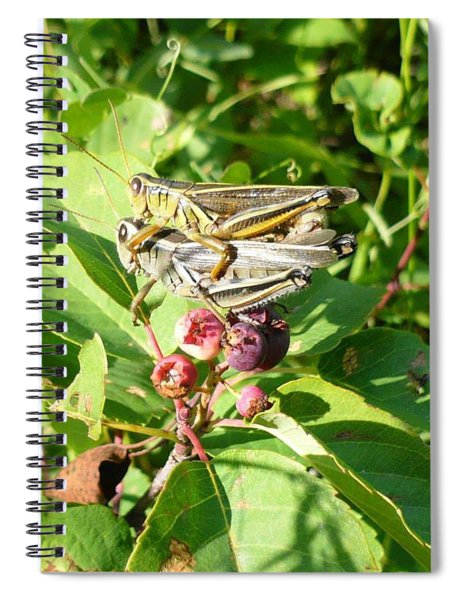 Grasshopper Love Spiral Notebook