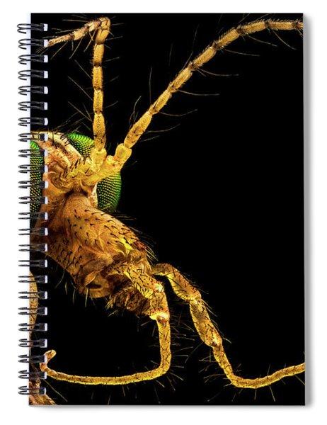 Green Eyed Crane Fly Spiral Notebook