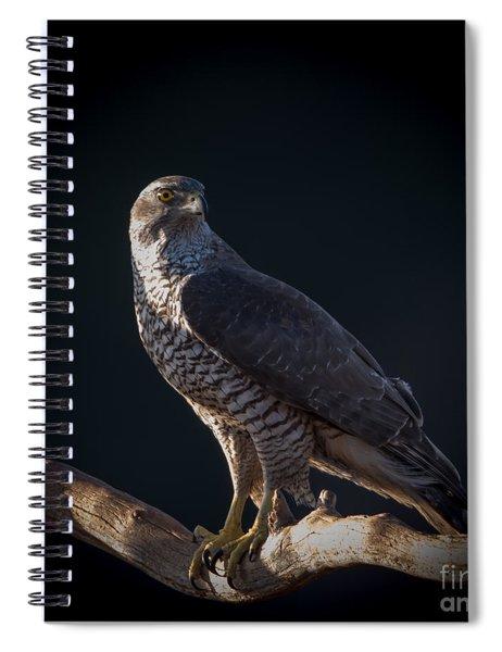 Hawk-eye Spiral Notebook