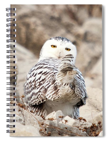 Heads Or Tails Spiral Notebook