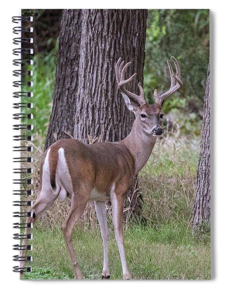 Large Buck Spiral Notebook
