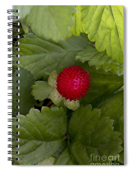 Mock Or Indian Strawberry Spiral Notebook