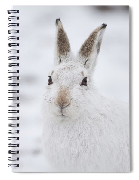 Mountain Hare In The Snow - Lepus Timidus  #1 Spiral Notebook