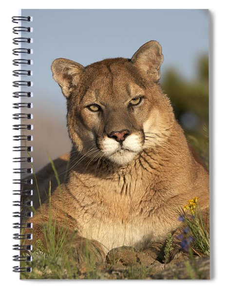 Mountain Lion Portrait North America Spiral Notebook