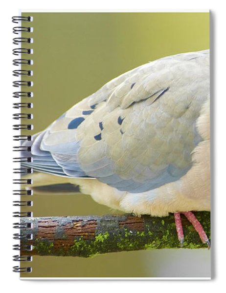 Mourning Dove On Tree Branch Spiral Notebook