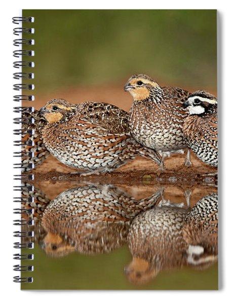 Northern Bobwhites Colinus Virginianus Wild Texas Spiral Notebook