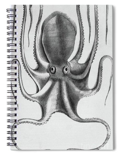 Octopus Spiral Notebook