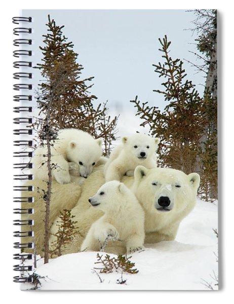 Polar Bear Ursus Maritimus Trio Spiral Notebook
