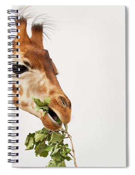 Portrait Of A Rothschild Giraffe  Spiral Notebook