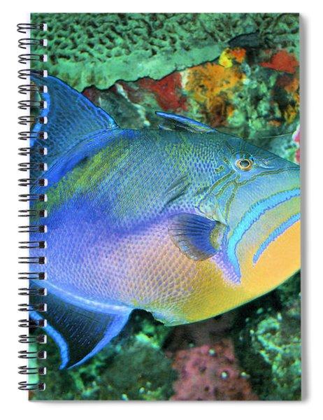 Queen Triggerfish Spiral Notebook