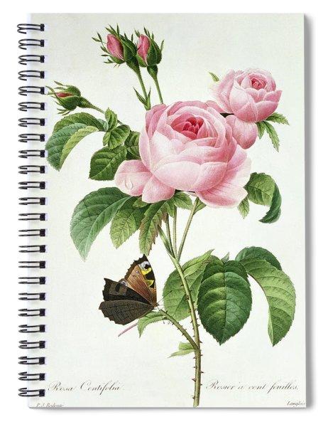 Rosa Centifolia Spiral Notebook