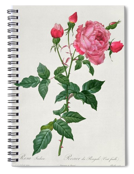 Rosa Indica Spiral Notebook