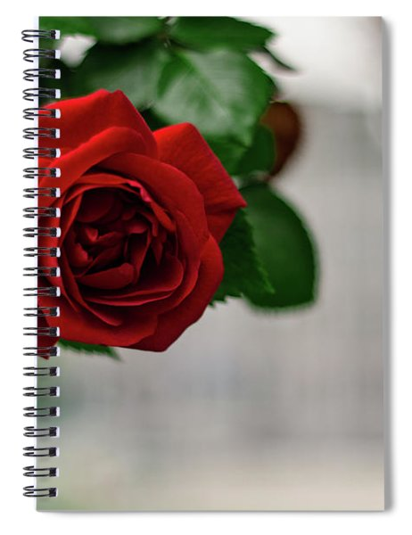 Roses In The City Park Spiral Notebook