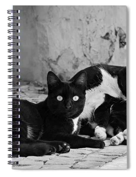 Spiral Notebook featuring the photograph Street Cats - Portugal by Barry O Carroll