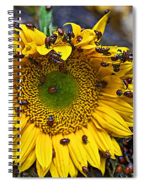 Sunflower Covered In Ladybugs Spiral Notebook