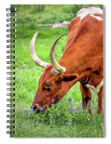 Spiral Notebook featuring the photograph Texas Longhorn Grazing by Robert Bellomy