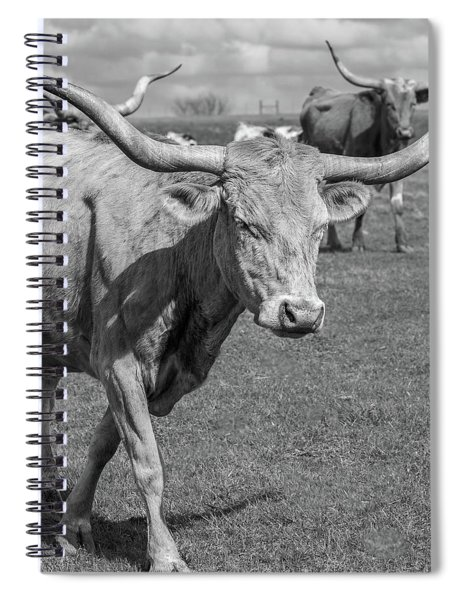 Spiral Notebook featuring the photograph Texas Longhorns by Robert Bellomy