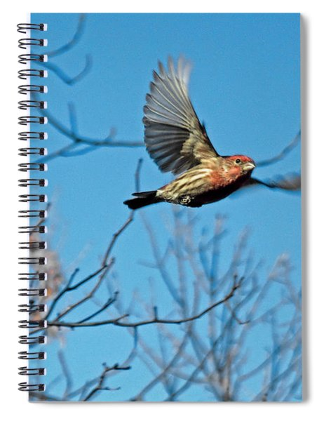 The House Finch In-flight Spiral Notebook