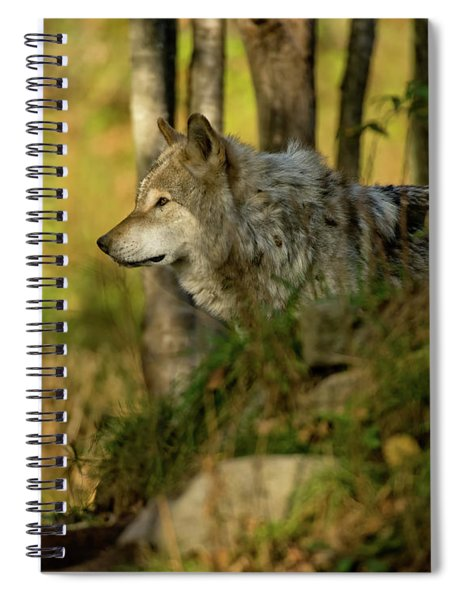 Timber Wolf In Forest Spiral Notebook