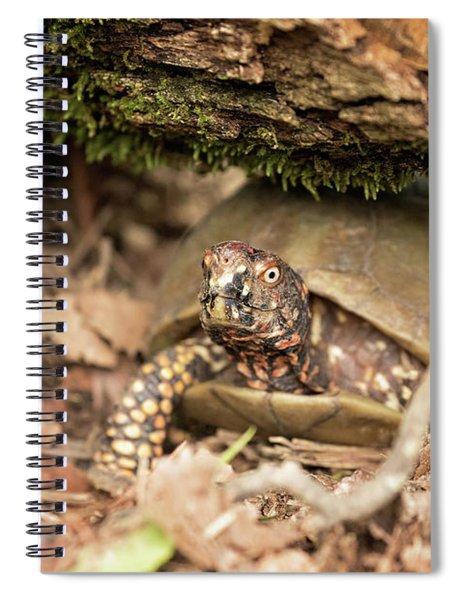 Turtle Town Spiral Notebook