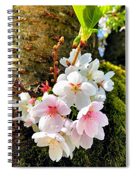 White Apple Blossom In Spring Spiral Notebook