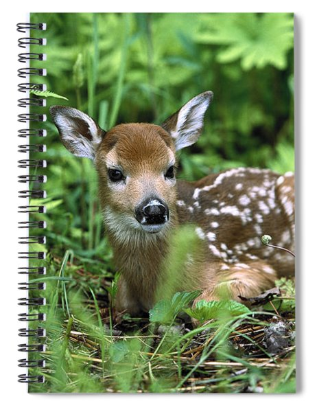 White-tailed Deer Odocoileus Spiral Notebook