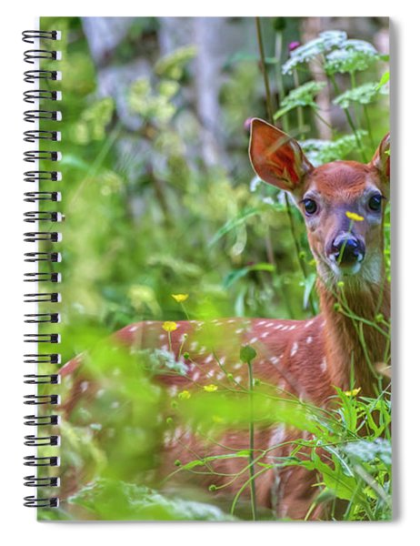 White-tailed Deer Spiral Notebook
