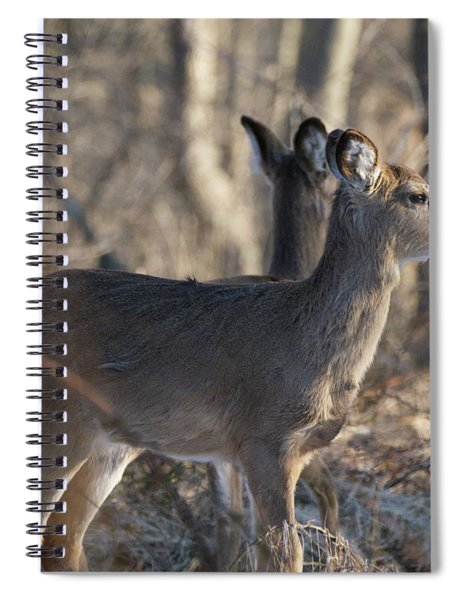 Wild Deer Spiral Notebook