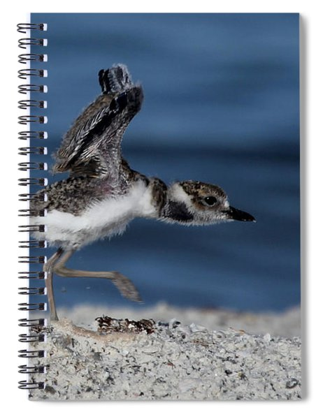 Wilson's Plover Spiral Notebook