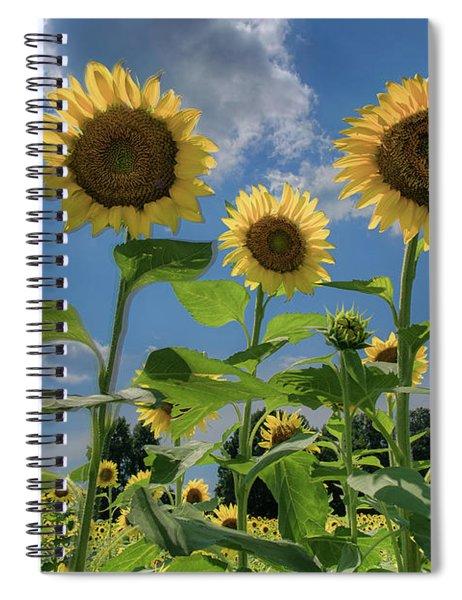 Windsor Castle Sunflowers Spiral Notebook