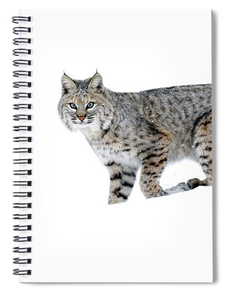 Winter Bobcat 2 Spiral Notebook
