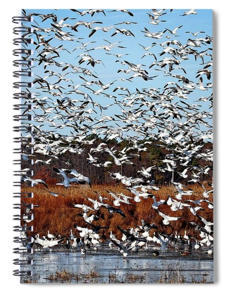 Wintering Snow Geese Spiral Notebook