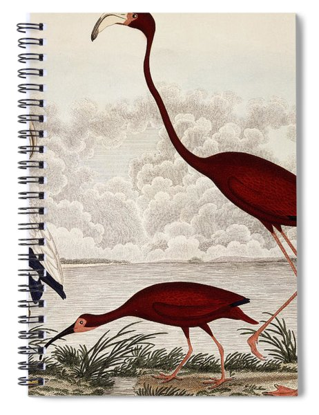 Wood Ibis, Scarlet Flamingo, White Ibis Spiral Notebook