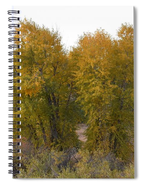 Aspen Trees In The Fall Co Spiral Notebook