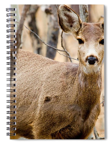 Mule Deer In The Pike National Forest Spiral Notebook