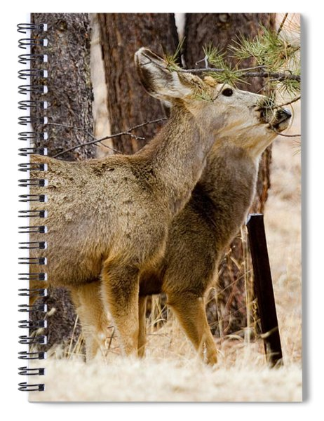Mule Deer In The Pike National Forest Of Colorado Spiral Notebook