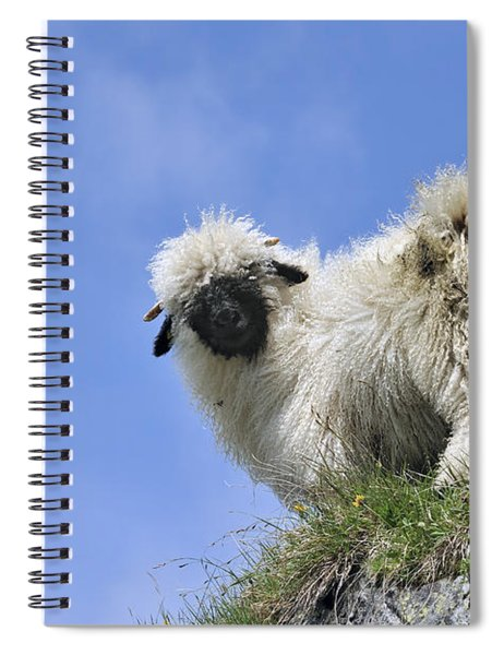 150827p302 Spiral Notebook
