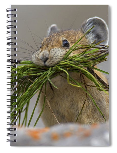 Pika With A Mouthful  Spiral Notebook