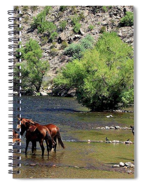 Arizona Wild Horses Spiral Notebook