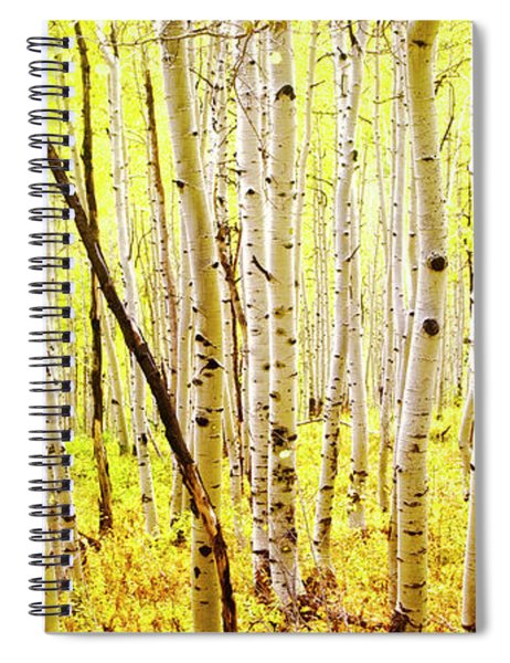 Aspen Grove II Spiral Notebook