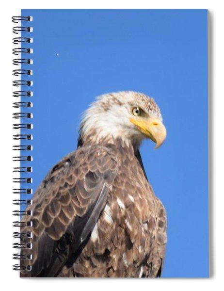 Bald Eagle Juvenile Perched Spiral Notebook