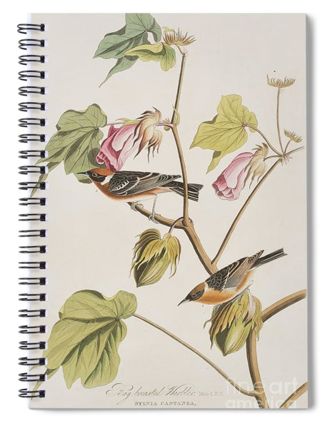 Bay Breasted Warbler Spiral Notebook